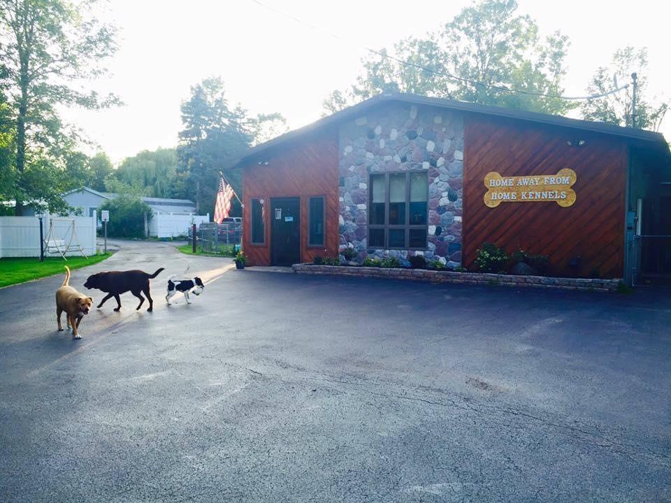 Dog Grooming West Seneca Ny
